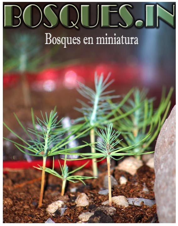 Miniature Forest, miniature trees,
